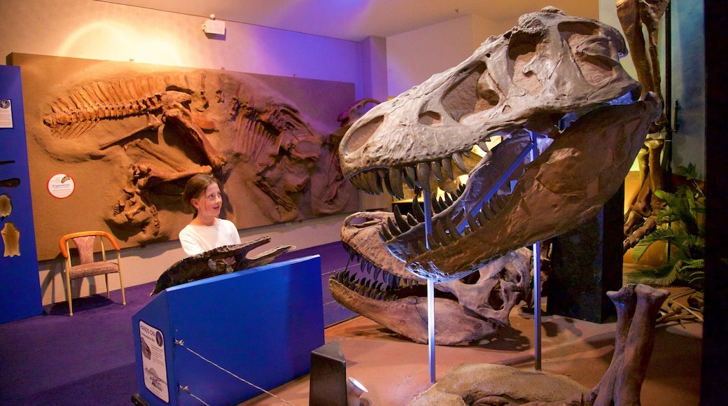 National Dinosaur Museum showing interior views as well as an individual child