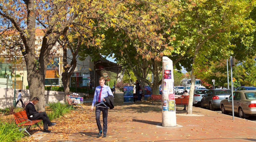 Manuka Shopping Centre which includes street scenes and autumn leaves