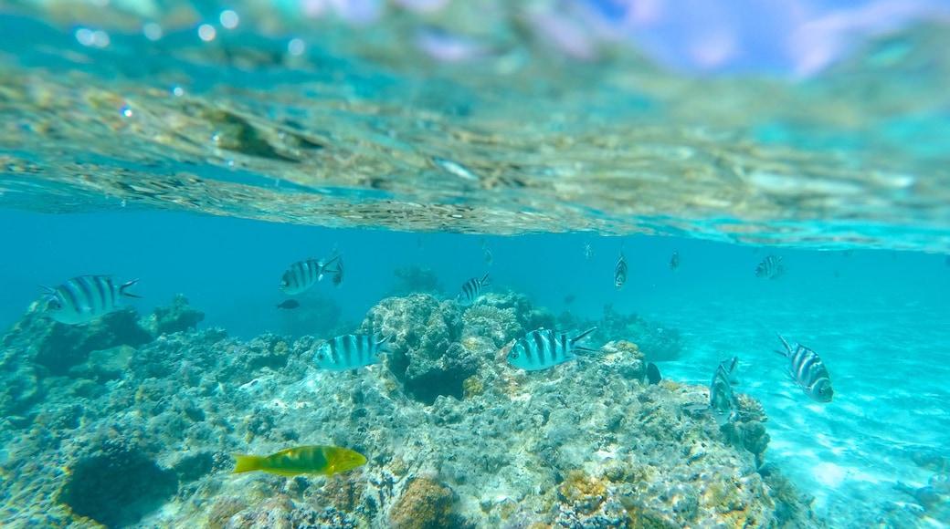 Aitutaki featuring marine life and colourful reefs