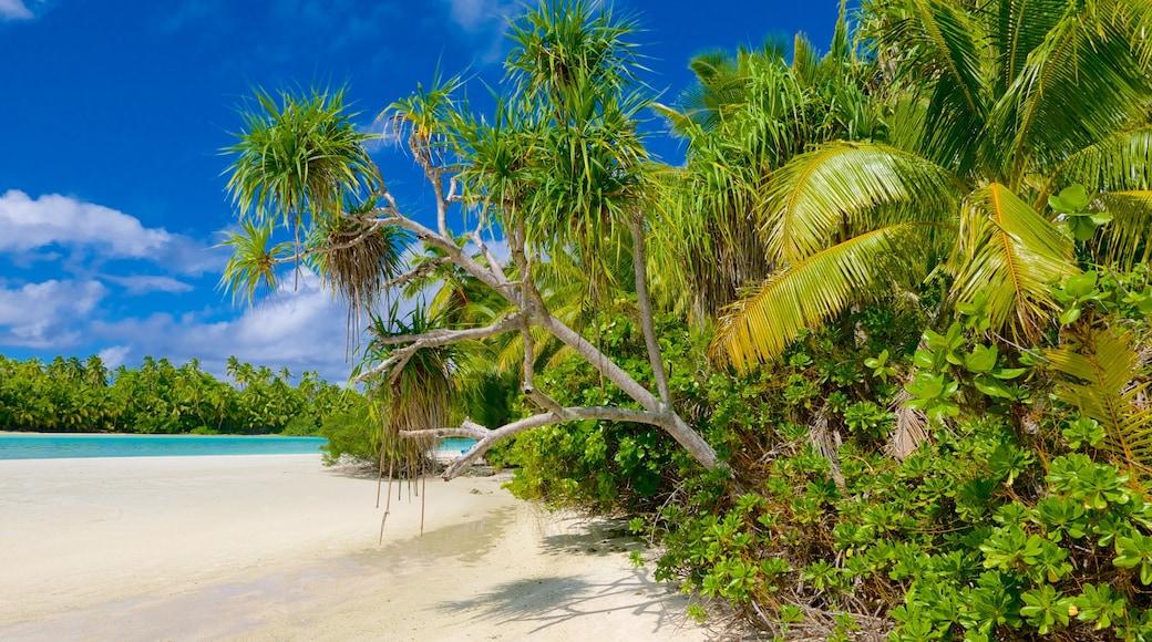 Playa de la isla de One Foot ofreciendo una playa de arena y escenas tropicales