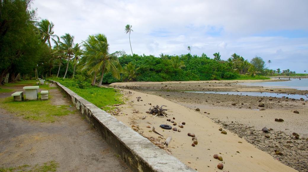 Ngatangiia showing a pebble beach