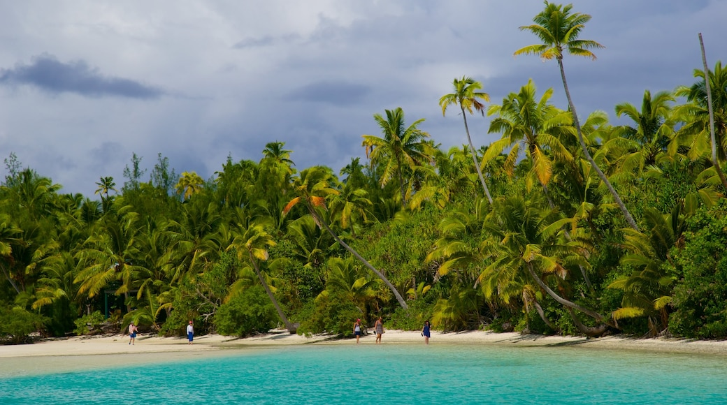 One Foot Island Beach showing tropical scenes and a sandy beach