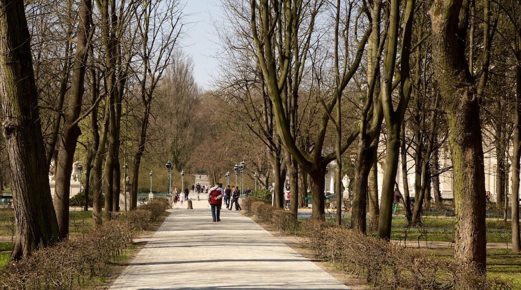 Lazienki Park featuring a park