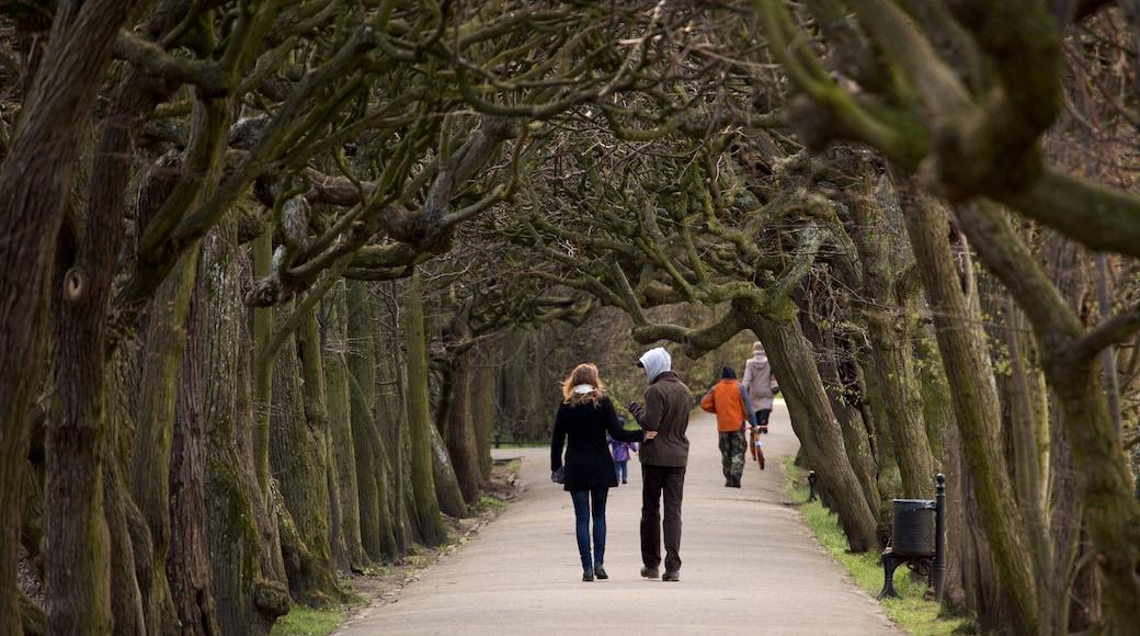 올리와 공원 을 보여주는 공원 뿐만 아니라 커플