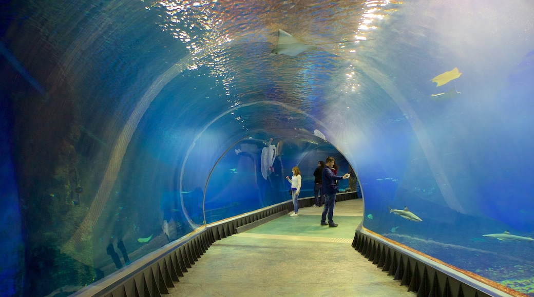 Wroclaw Zoo showing marine life as well as a small group of people