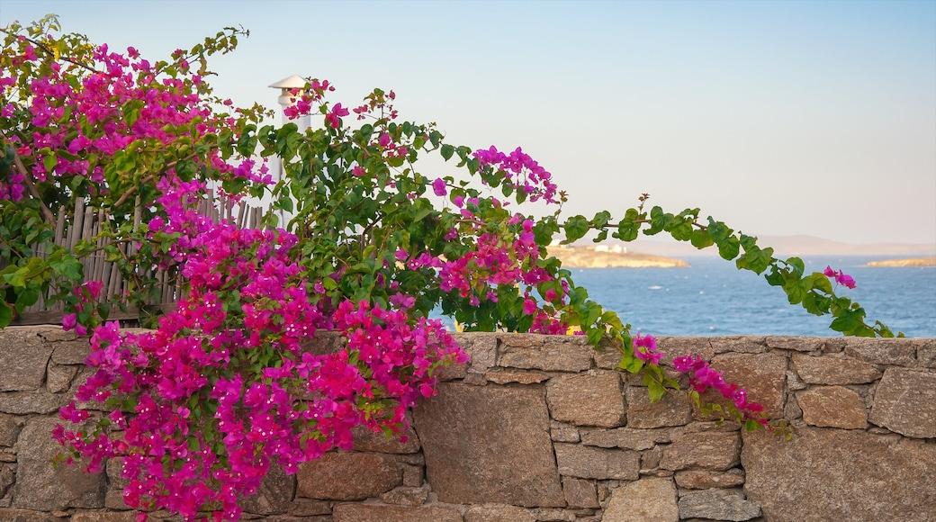 Diano Marina welches beinhaltet allgemeine Küstenansicht und Blumen
