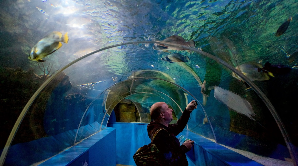 Blue Reef Aquarium which includes marine life as well as an individual male