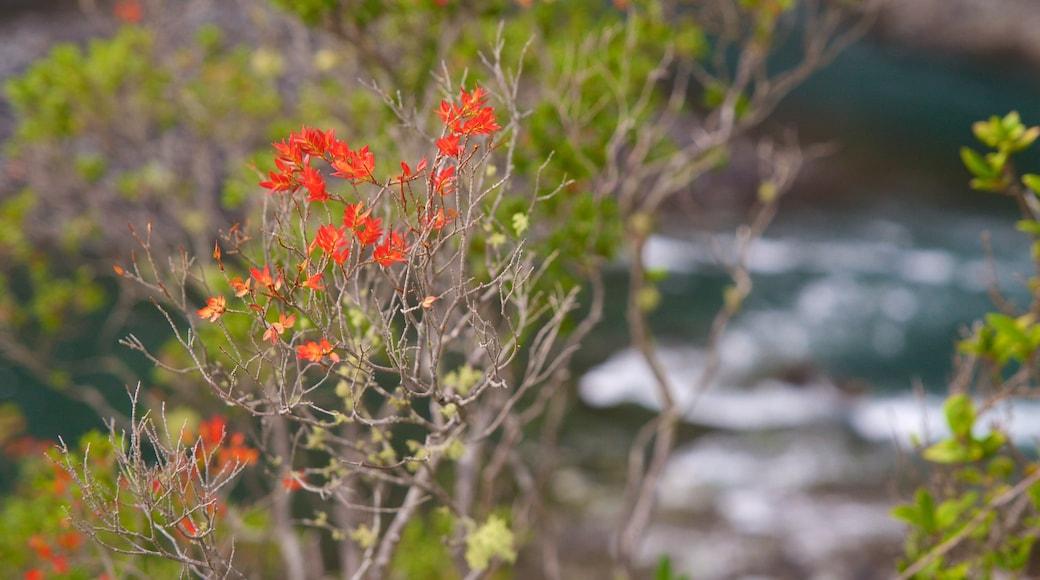 Chutes de Petrohue qui includes fleurs