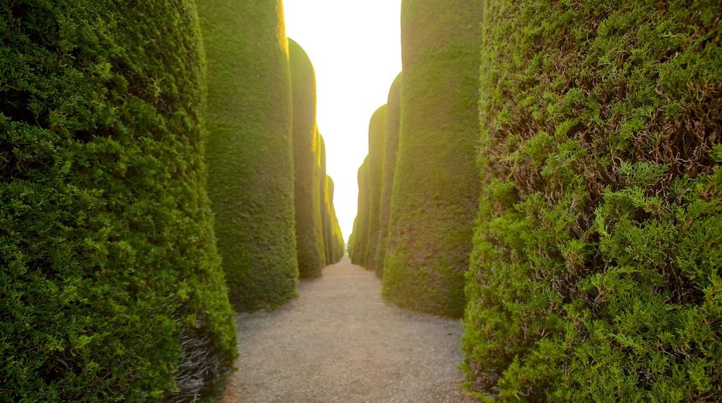 Cimetière de Punta Arenas mettant en vedette jardin