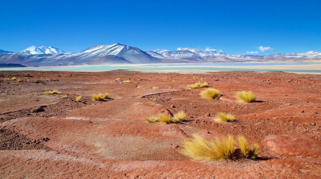 San Pedro de Atacama ofreciendo escenas tranquilas, vista panorámica y un lago o espejo de agua