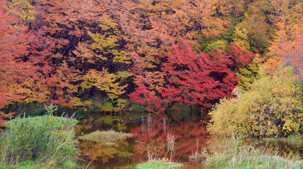El Calafate mostrando paisajes forestales, un estanque y hojas de otoño