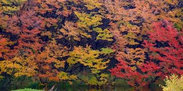 Region Patagonien welches beinhaltet Teich, Herbstblätter und Waldmotive