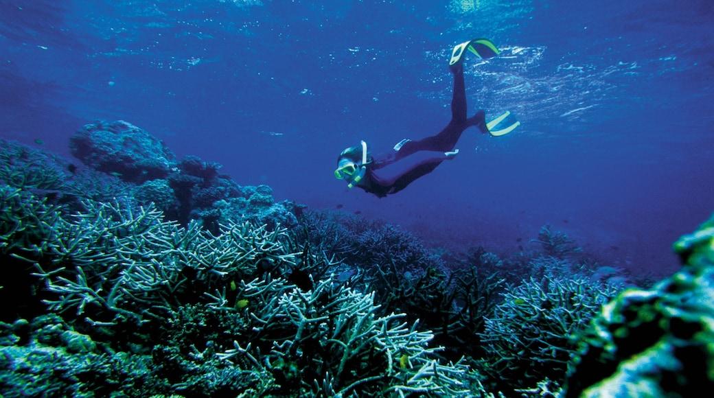 Islas Salomón mostrando snorkeling y arrecifes coloridos y también una mujer