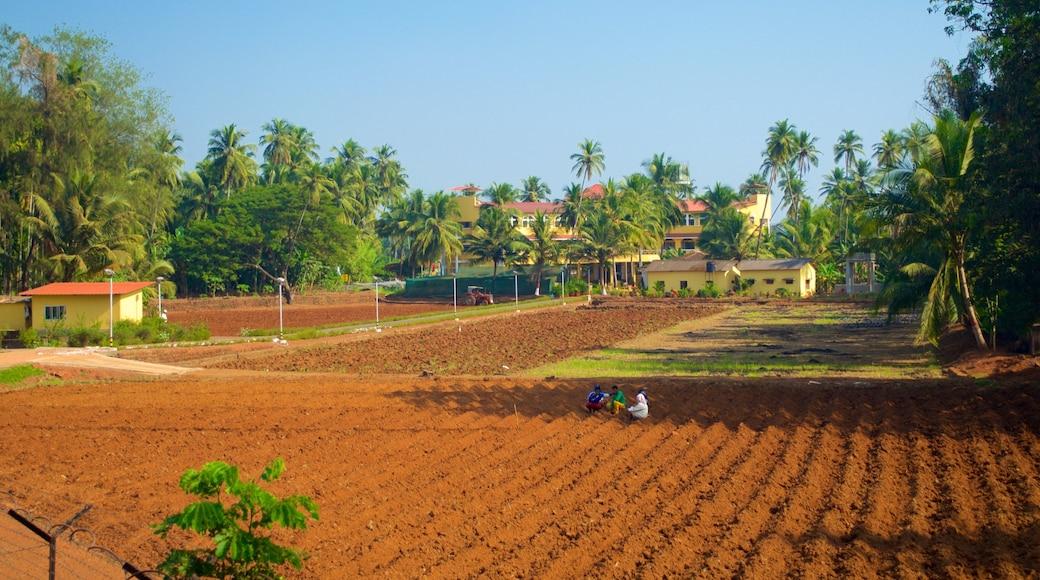 Basílica de Bom Jesus que inclui fazenda