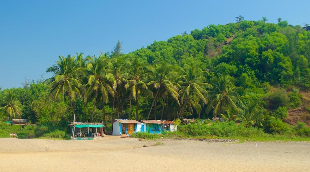 Praia de Querim caracterizando uma praia de areia, cenas tropicais e paisagens litorâneas