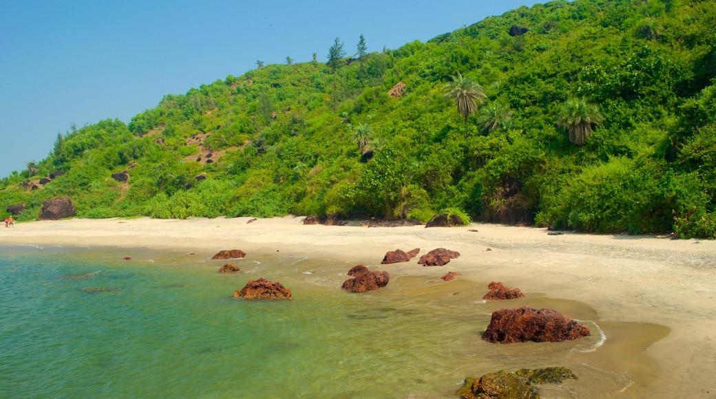 Praia de Querim mostrando uma praia de areia, paisagens litorâneas e cenas tropicais