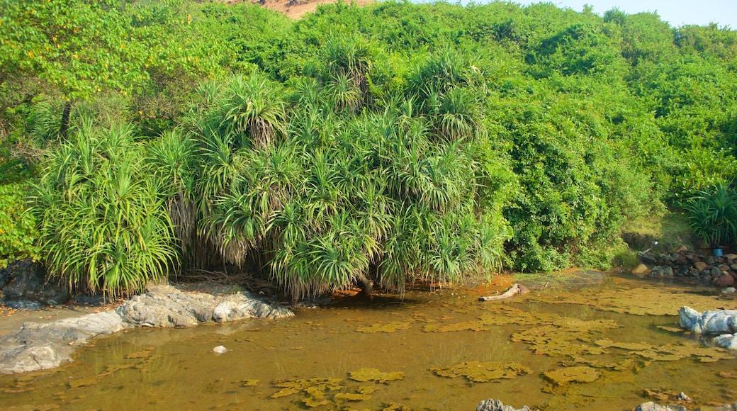 Praia de Vagator caracterizando mangues e florestas