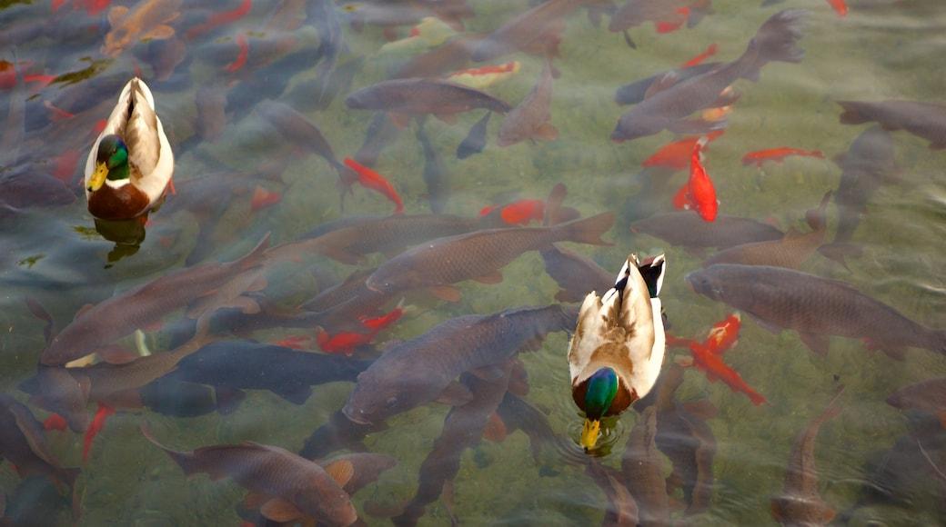 漢斯維爾 其中包括 鳥類, 海洋生物 和 池塘