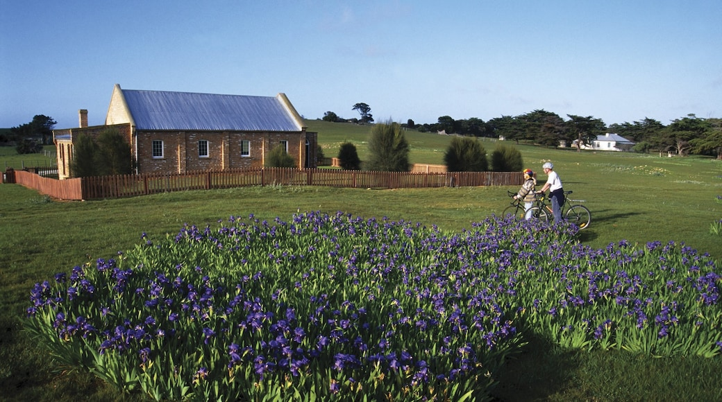 Flinders Island showing tranquil scenes, a house and cycling