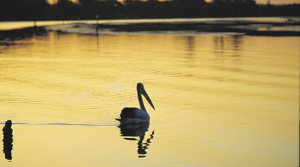 Taree featuring bird life, a lake or waterhole and a sunset