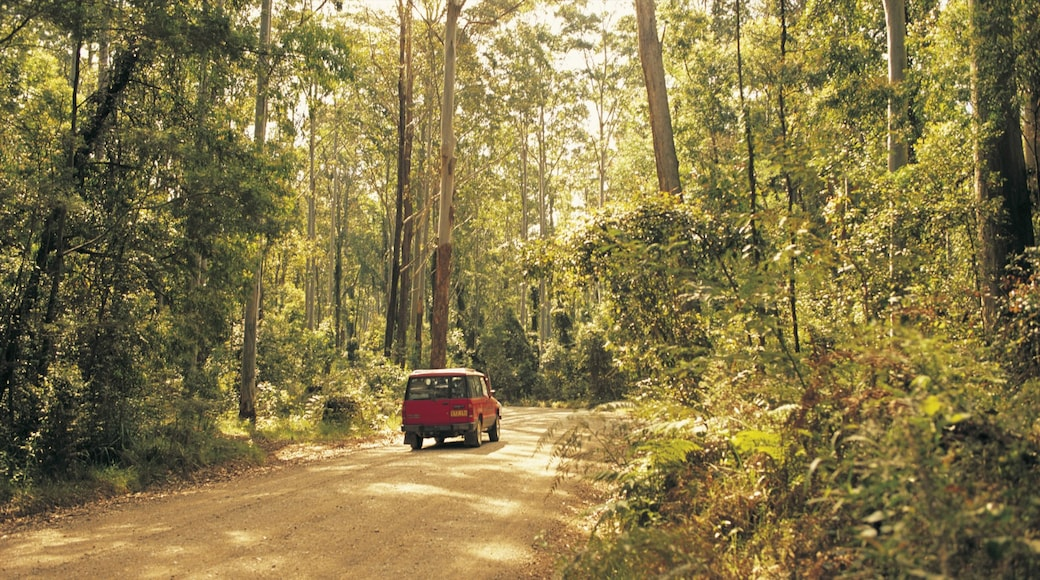 Batemans Bay featuring rainforest and touring