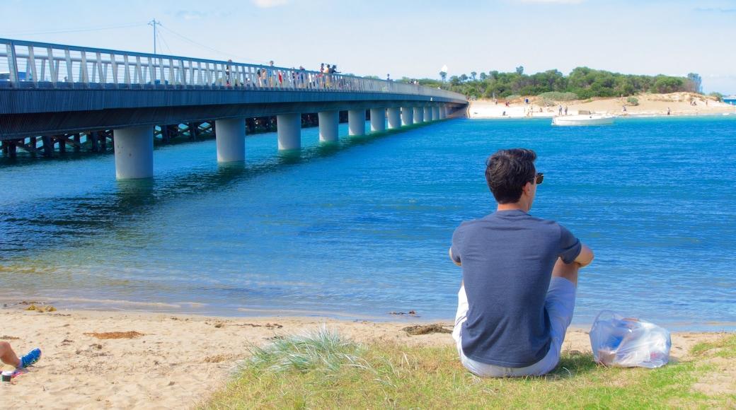 Geelong - Bellarine Peninsula showing general coastal views and a bridge as well as an individual male