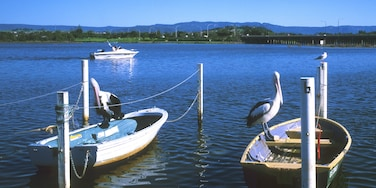 Shellharbour featuring boating, bird life and a bay or harbor
