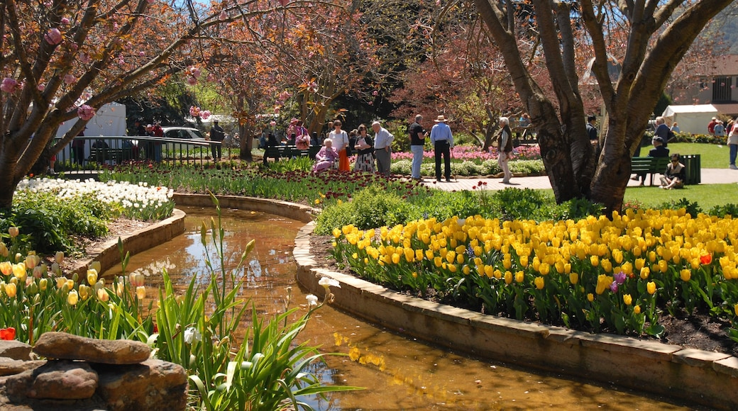 Bowral showing a park