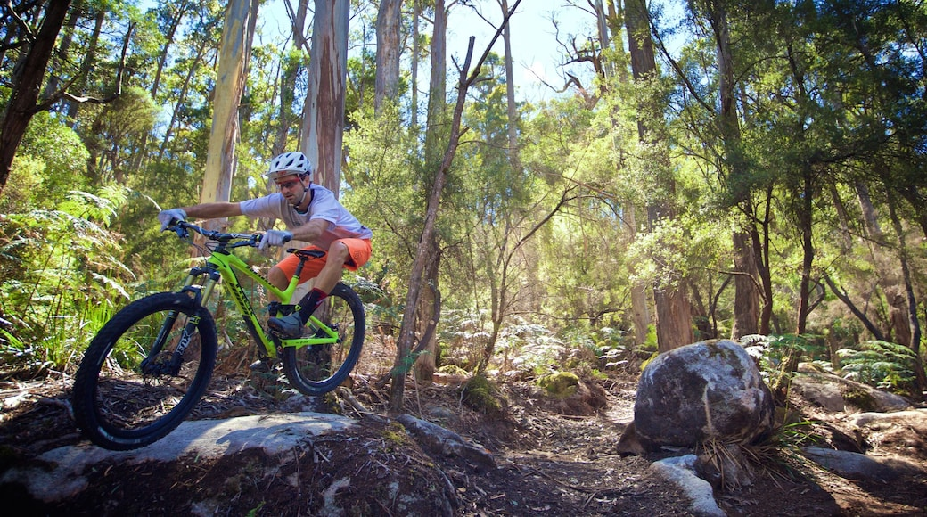Derby which includes mountain biking and forests as well as an individual male
