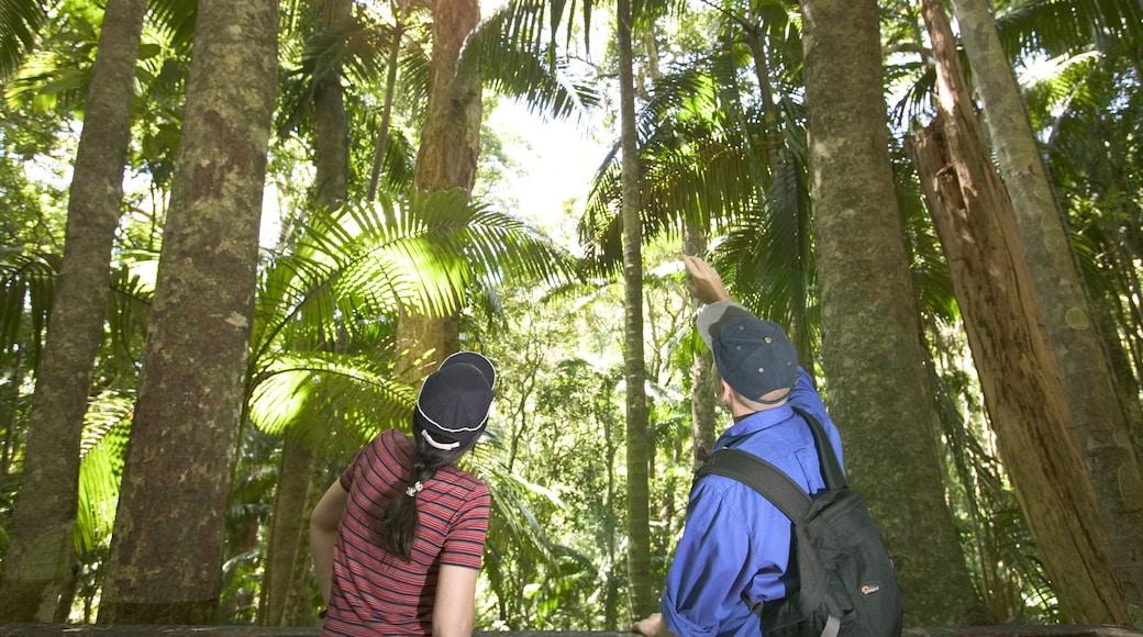 Parque Nacional Monte Advertencia mostrando selva y también una pareja