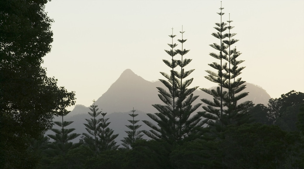 Mount Warning National Park showing mountains and forests