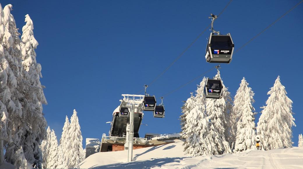 Skigebiet Kronplatz mit einem Waldmotive, Gondel und Schnee