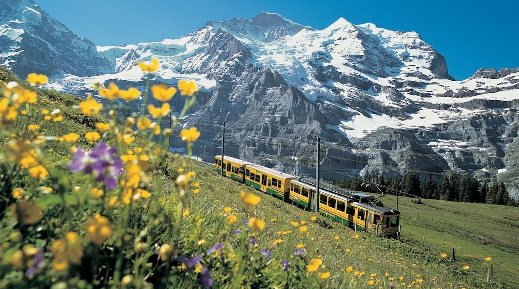 Jungfraujoch caracterizando montanhas, flores silvestres e itens de ferrovia