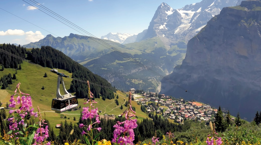 Muerren featuring wildflowers, a gondola and a small town or village