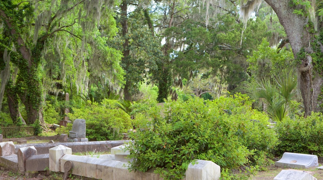 Bonaventure Cemetery which includes forest scenes and a cemetery