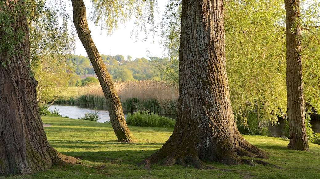 Wiltshire which includes tranquil scenes