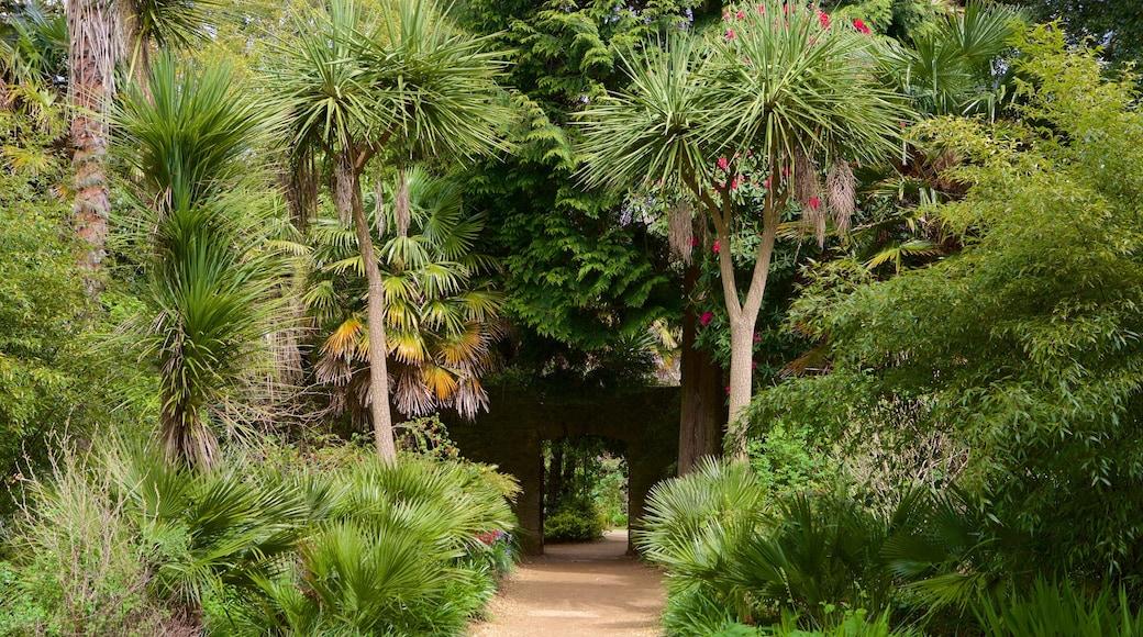 Abbotsbury Sub-Tropical Gardens showing a garden