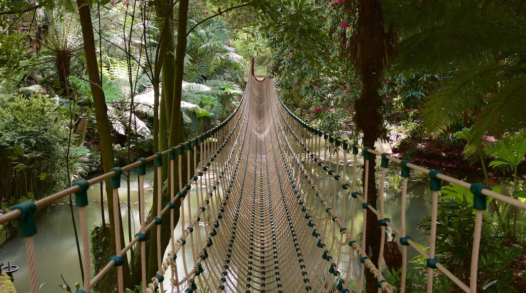 Abbotsbury Sub-Tropical Gardens featuring rainforest, a suspension bridge or treetop walkway and forest scenes