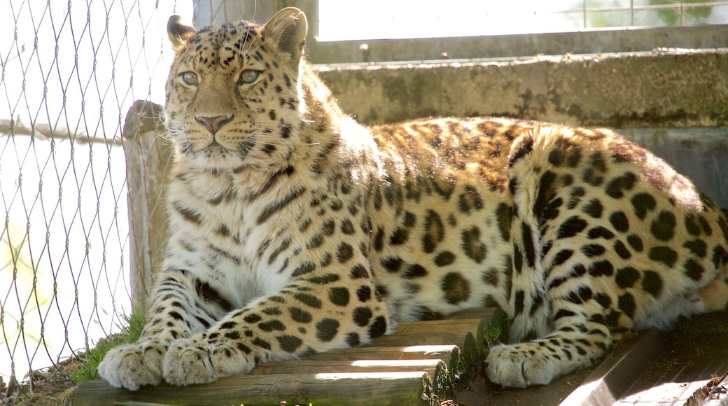 Marwell Wildlife which includes zoo animals and dangerous animals