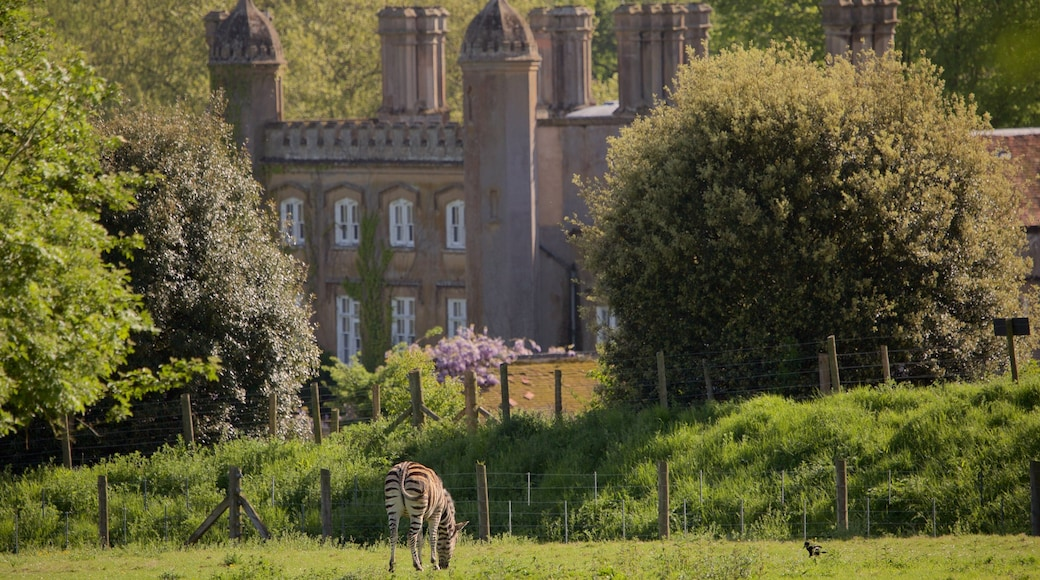 Marwell Wildlife which includes a castle and cuddly or friendly animals