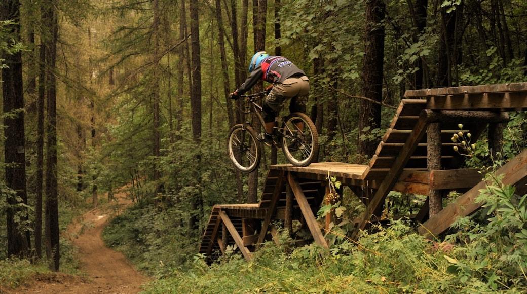 Resort sciistico di Bardonecchia caratteristiche di mountain bike e paesaggio forestale