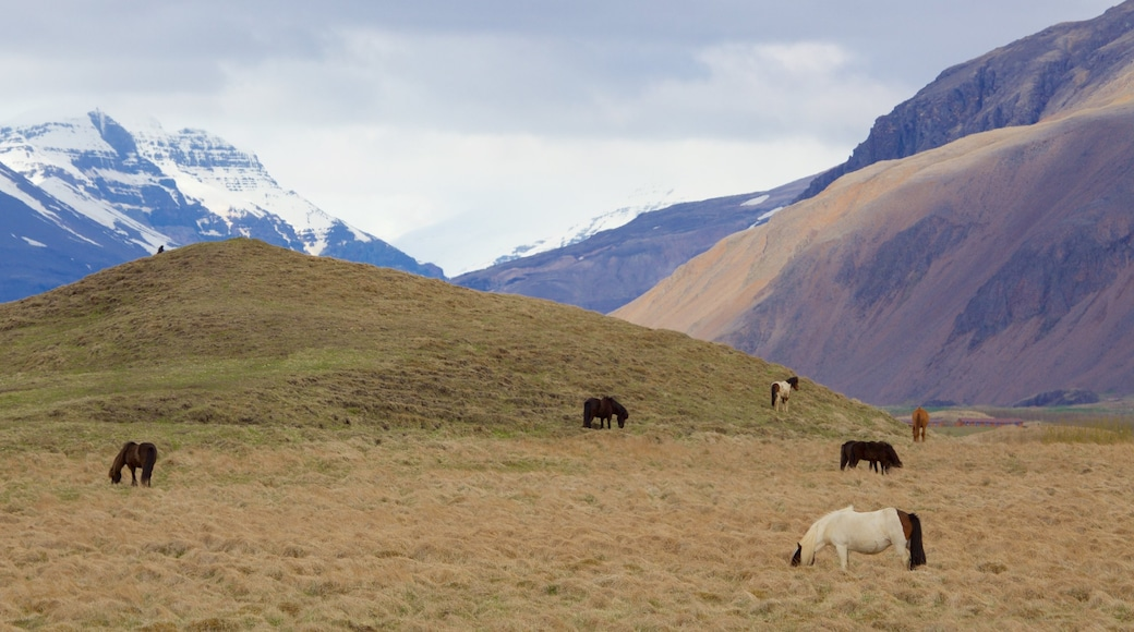 East Iceland showing tranquil scenes, land animals and mountains