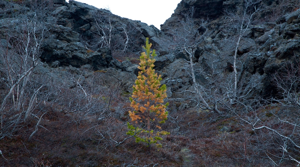 Dimmuborgir som inkluderar stillsam natur och höstlöv