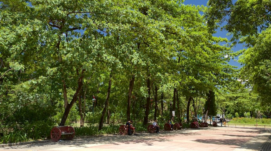 Quezon City featuring forest scenes