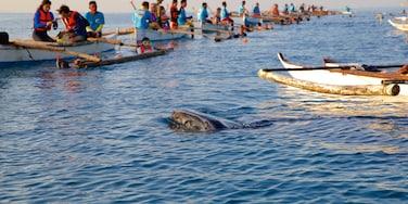 Oslob showing general coastal views, marine life and kayaking or canoeing