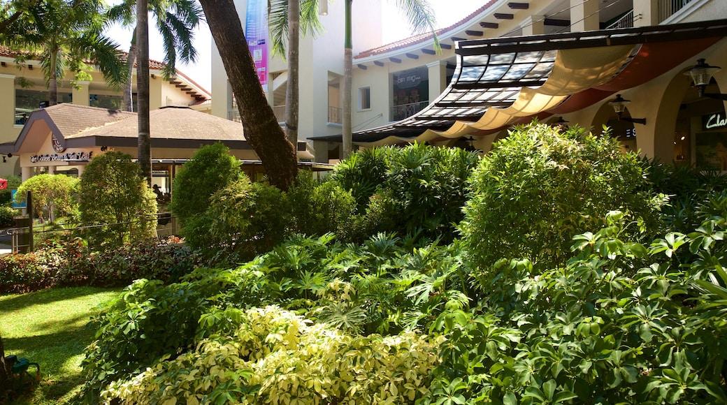 Alabang showing a garden