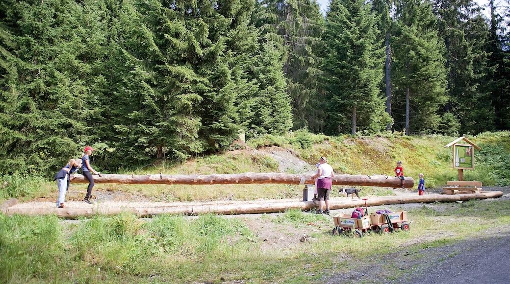 Brixen im Thale welches beinhaltet Wälder sowie kleine Menschengruppe
