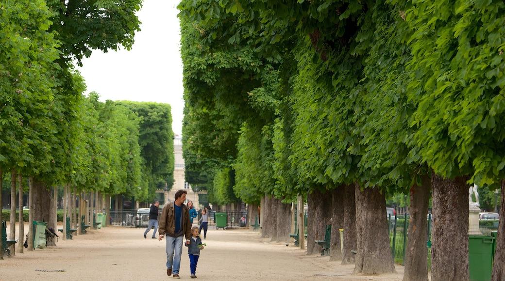 6th Arrondissement showing a park