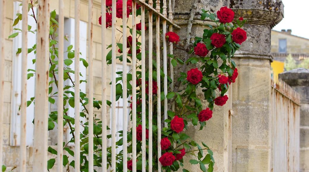 Bordeaux Wine Region showing flowers