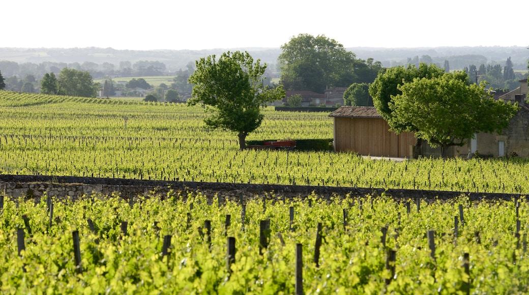 Bordeaux Wine Region
